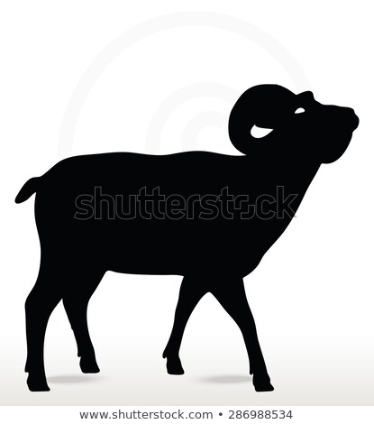 big horn sheep  silhouette in face upward  pose  Stock photo © Istanbul2009