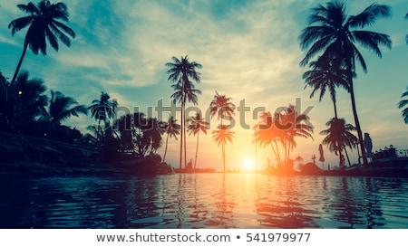 verão · pôr · do · sol · palmeira · silhuetas · noite - foto stock © dariazu