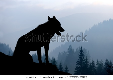 Foto stock: Wolf At Sunset