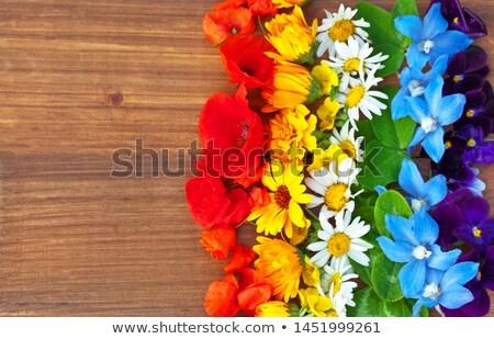 lóhere · virág · zöld · magas · döntés · fotó - stock fotó © Sportactive