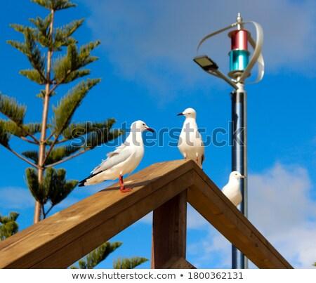 dois · branco · gaivotas · praia · água · mar - foto stock © Burchenko