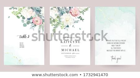 witte · dahlia · bloem · textuur · tuin · achtergrond - stockfoto © Paha_L