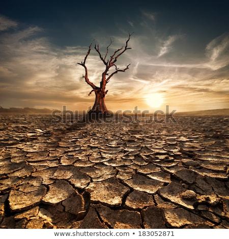 puesta · de · sol · sáhara · desierto · camellos · palmas · sol - foto stock © tracer