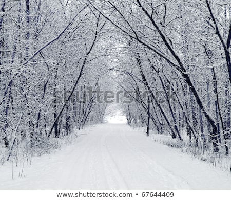 alley with white icy trees in snow covered landscape Stock photo © meinzahn