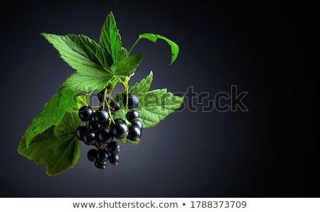 fresh berries of blackcurrant stock photo © zhekos