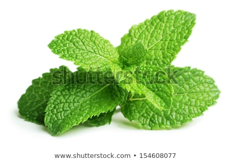 fresh mint leaves stock photo © drobacphoto