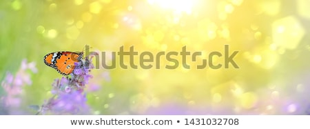 a flower garden with butterflies stock photo © bluering