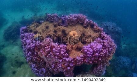çok deniz sualtı görmek spor doğa Stok fotoğraf © bank215