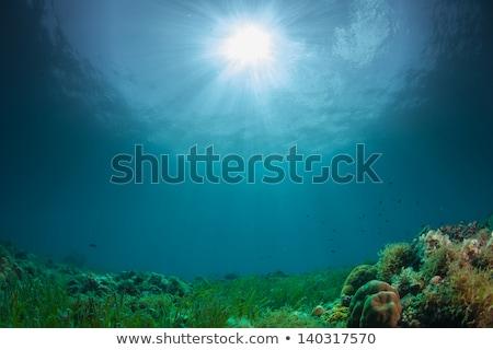çevre sualtı deniz mercan balık gıda Stok fotoğraf © bank215