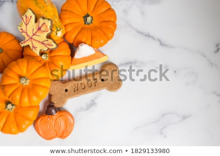Thanksgiving Pet Celebration Stock photo © Lightsource