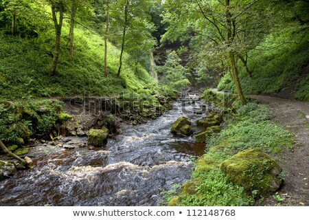 yorkshire · waterval · park · Engeland · portret · rivier - stockfoto © capturelight