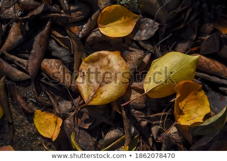 Dry Bed of Colorful Autumn Leaves on the Ground Stock photo © ozgur