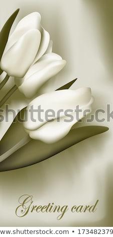 Bunch of tulips. EPS 10 Stock photo © beholdereye
