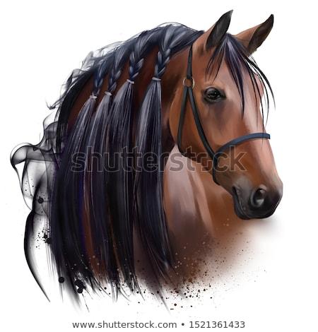 head of beautiful bay horse stock photo © tainasohlman