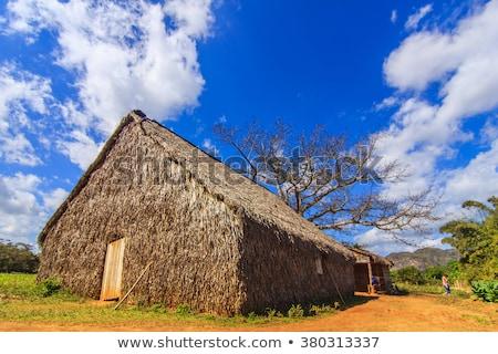традиционный табак плантация известный Куба Сток-фото © CaptureLight