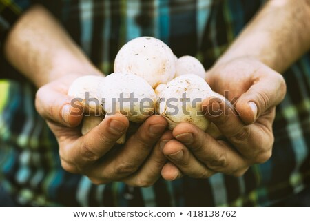 Organic champignon mushroom on farmers market Stock photo © stevanovicigor