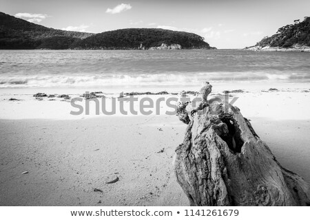 Driftwood At Refuge Cove Stock photo © THP