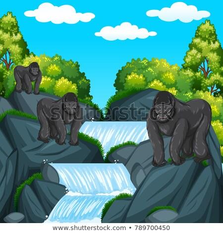Drie waterval illustratie boom landschap tuin Stockfoto © bluering