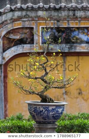 Вьетнам бонсай дерево украшение Запретный город комплекс Сток-фото © romitasromala