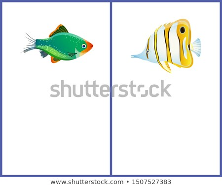 Green Tiger Barb and Striped Butterfly Fish Images Stock photo © robuart