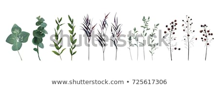 big set of cute leaves from different trees on white stock photo © evgeny89