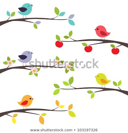 Sevimli kuşlar çiçek elma ağacı şube yeşil Stok fotoğraf © Margolana