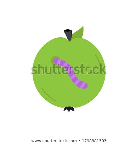 funny worms vector circle icon Stock photo © blaskorizov