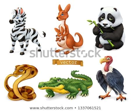 Szett dögkeselyű karakter terv illusztráció háttér Stock fotó © colematt