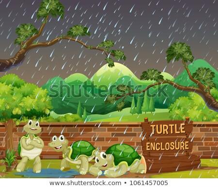 Dierentuin scène drie schildpadden regen illustratie Stockfoto © colematt