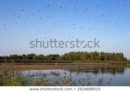 Zwarte rivier natuur vogel winter Stockfoto © taviphoto