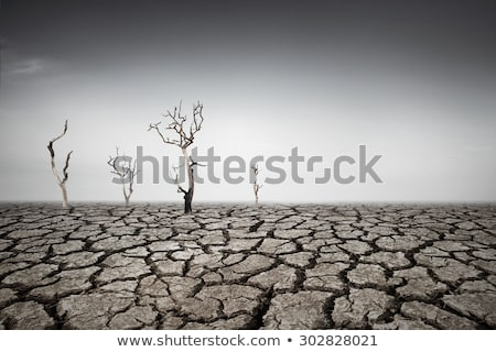 Set of dry land Stock photo © bluering