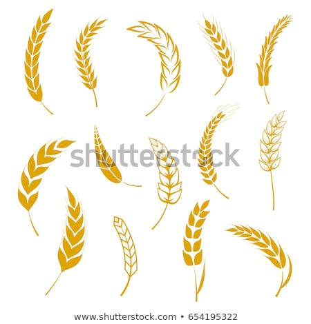 designed barley wheat spike and seed set vector stock photo © pikepicture