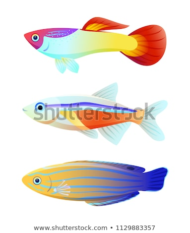 Guppy Fish and Blue Striped Tamarin Wrasse Icons Stock photo © robuart