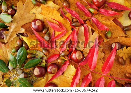 Bright autumn leaves, conkers and evergreen oak acorns backgroun Stock photo © sarahdoow