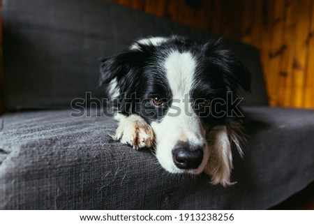 Indoor shot of lovely pedigree puppy sits on comfortable sofa in living room stack of boxes with per Stock photo © vkstudio
