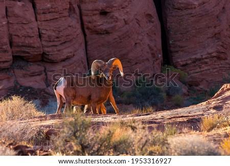piros · kő · kanyon · Nevada · látogató · központ - stock fotó © rigucci