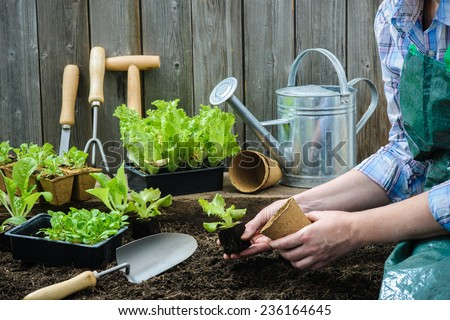 Garden tools for transplantation plants holded by hands of gardener  Stock photo © deandrobot