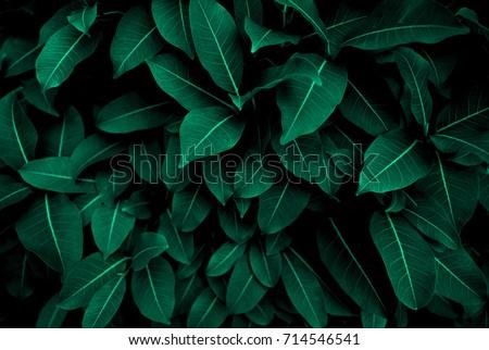 Green leaf background Stock photo © Oakozhan