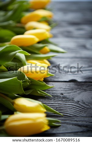 composition of fresh yellow tulips placed in row on black rustic wooden table stock photo © dash