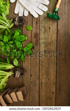 Flat lay of Gardening tools, basil, eco flowerpot, soil on white wooden background. Stock photo © Illia