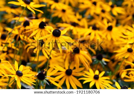 Dziedzinie żółte kwiaty pomarańczowy różowy róż kwiat Zdjęcia stock © olira