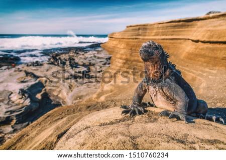 島々 海洋 イグアナ 動物 野生動物 太陽 ストックフォト © Maridav
