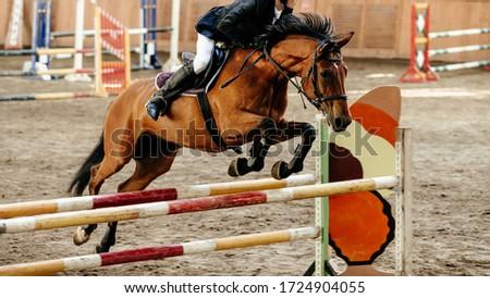 Lovas lovaglás ló előadás ugrik stadion Stock fotó © patrimonio