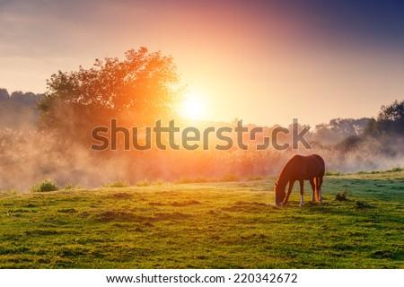 Stock fotó: Lovak · testtartás · ősz · jelenet · erdő · ló