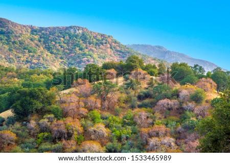 Agradable paisaje colorido árboles secoya tres Foto stock © meinzahn
