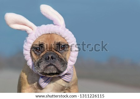 adorable french bulldog wearing andimal print headband sitting Stock photo © feedough