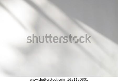 Ombre effetti up foglia impianti Foto d'archivio © MarySan