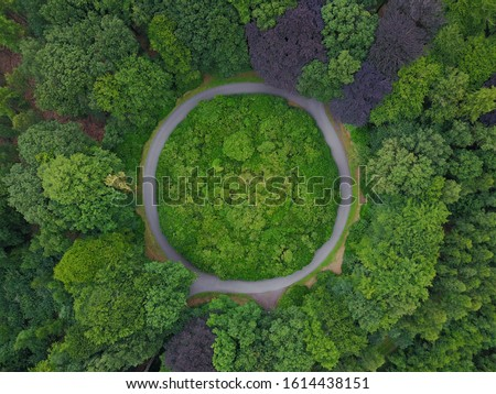Beautiful road in the middle of a forest Stock photo © iko