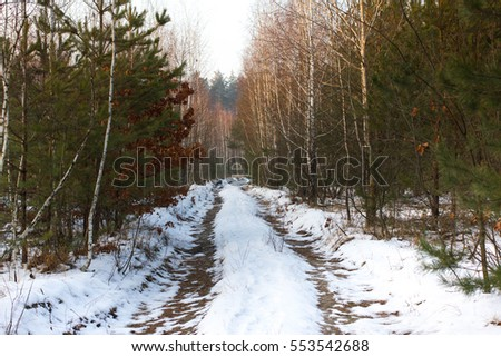 winter temperate forest Stock photo © smithore
