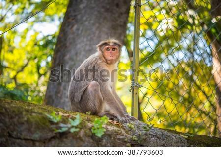 India Kumily, Kerala, India - National park Periyar Wildlife San Stock photo © cookelma